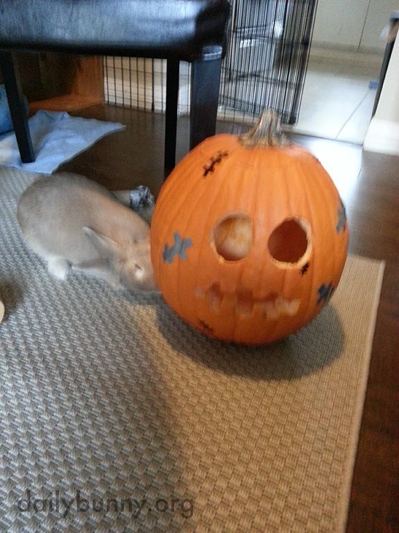The Daily Bunny's Halloween 2014 Mega-Post! 9
