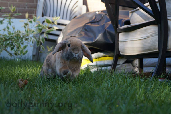 Bunnies Get the Full Sensory Experience in the Backyard 1