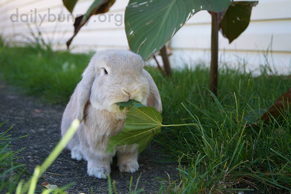 Bunnies Get the Full Sensory Experience in the Backyard 2