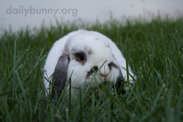 Bunnies Get the Full Sensory Experience in the Backyard 3