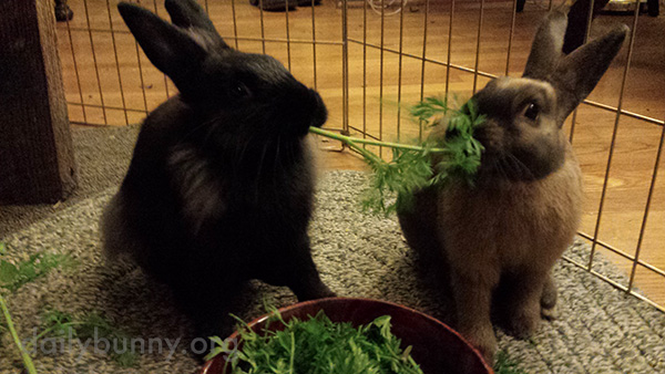 Bunnies Reenact a Lady and the Tramp Scene