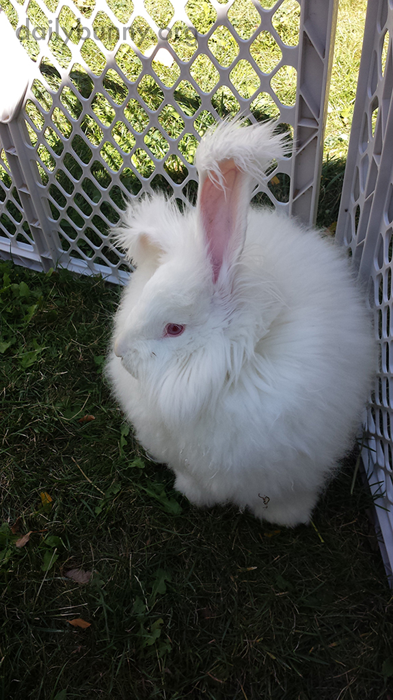Bunny Has Ears Like Pom-Poms