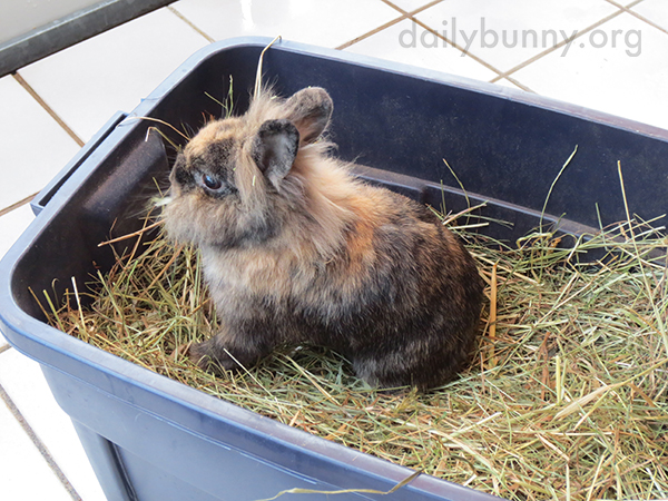 Bunny Is in Hay Heaven 1