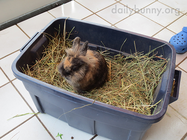 Bunny Is in Hay Heaven 2