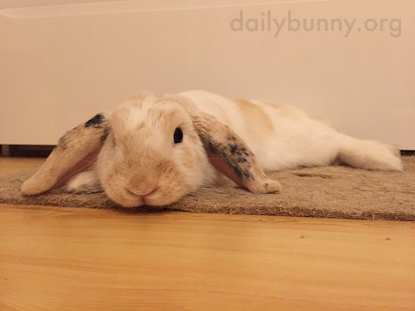 Bunny Melts Right into the Carpet 1