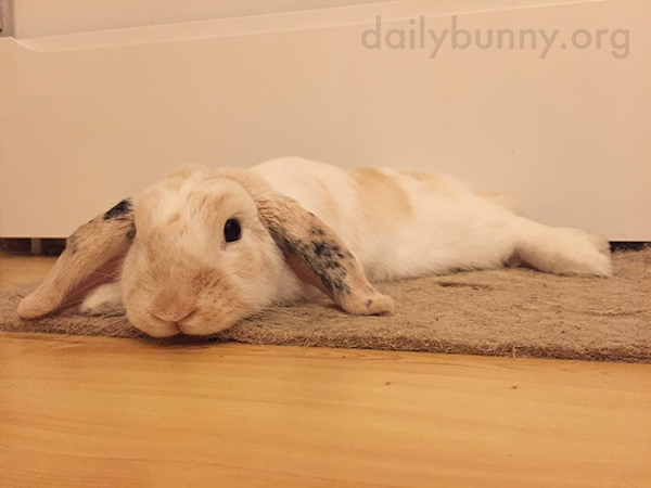 Bunny Melts Right into the Carpet 3