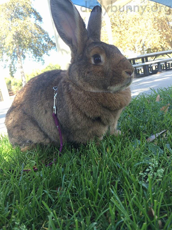 Bunny Readies Himself for a Romp in the Park