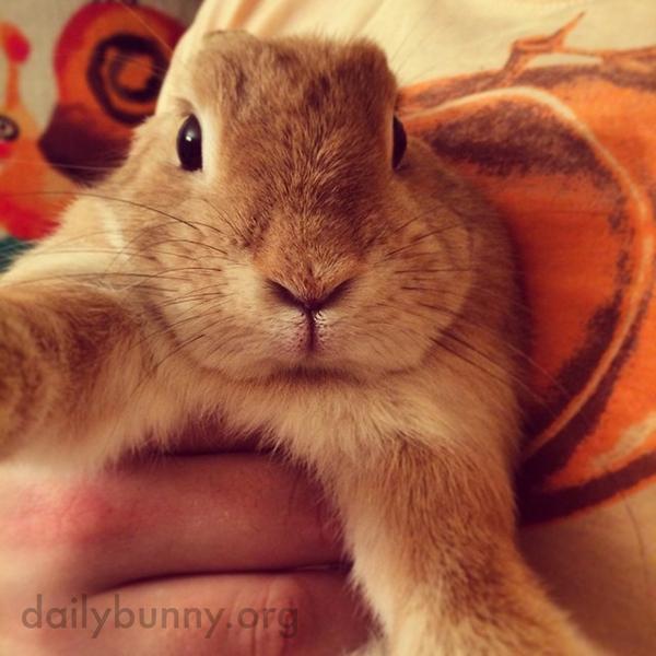 Bunny Selfie!