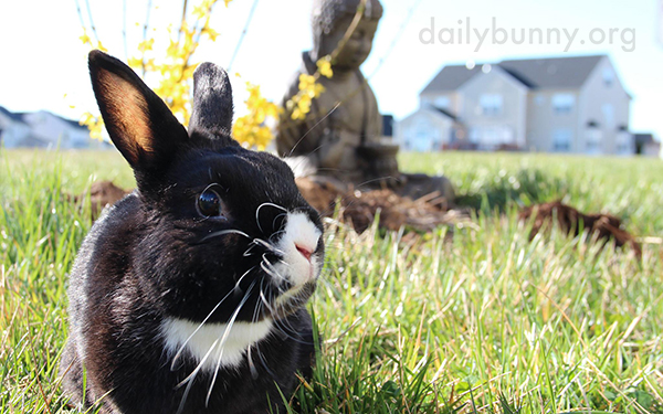 Bunny Takes in the Scenery
