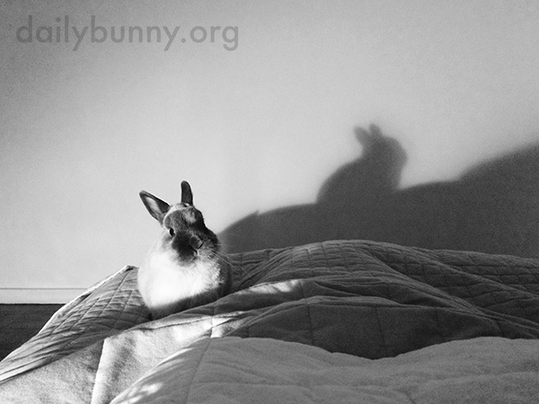 Don't Be Afraid, Bunny - It's Just Your Shadow!