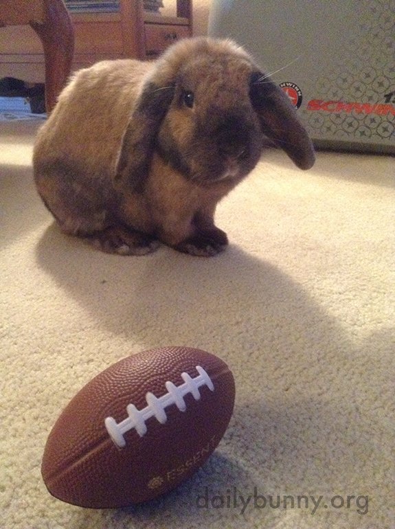Football Is Fine on Thanksgiving, Human, But Where's My Feast of Greens?