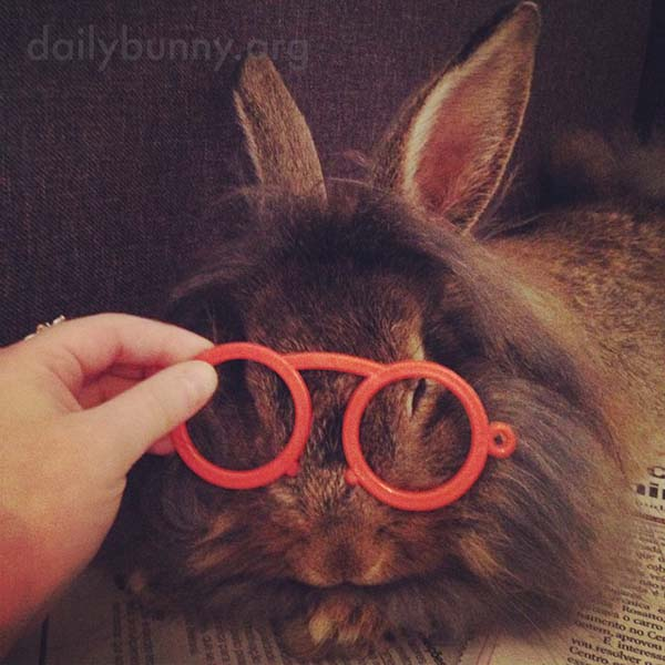 Intellectual Bunny Reads the Paper