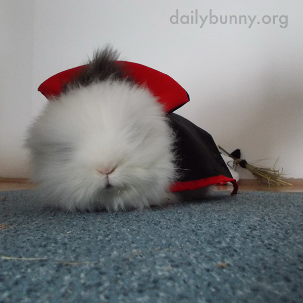 The Daily Bunny's Halloween 2014 Mega-Post - Part Two! 1