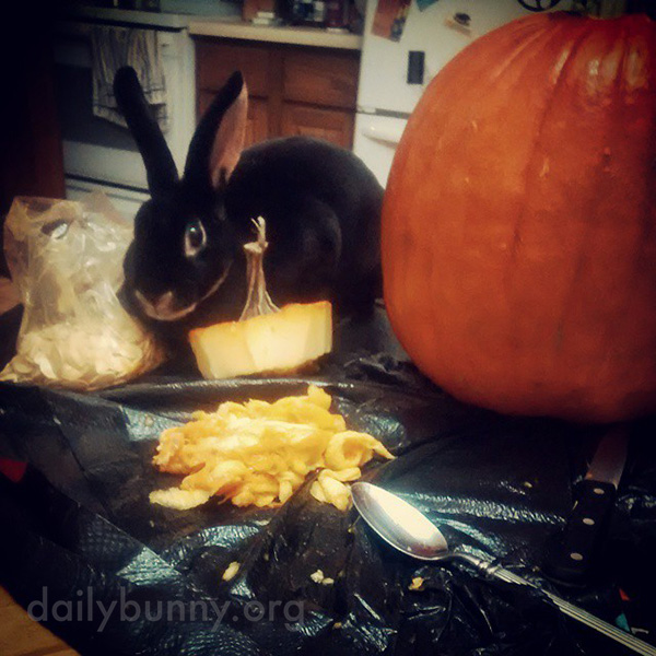 The Daily Bunny's Halloween 2014 Mega-Post - Part Two! 4