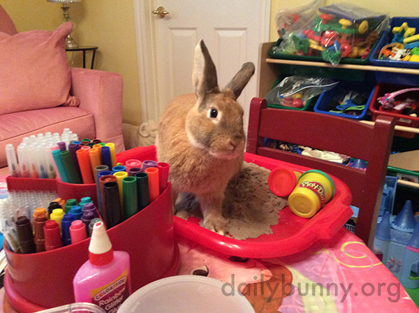 Where'd the Small Human Go? We Were Just Getting Started!