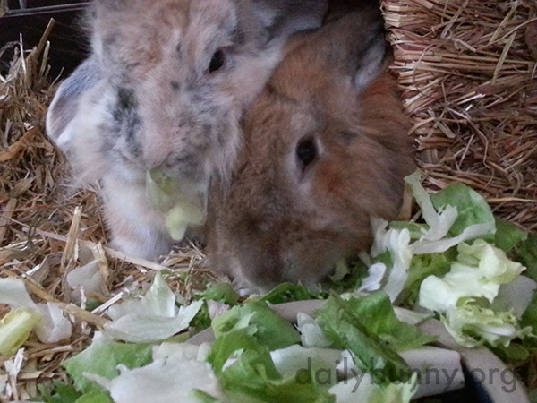 Bunnies Snuggle and Snack Together