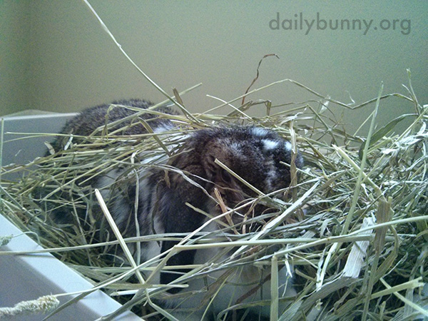 Bunny Camouflages Himself with His Hay 1