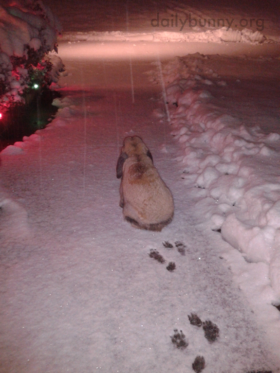Bunny Checks Out the Falling Snow