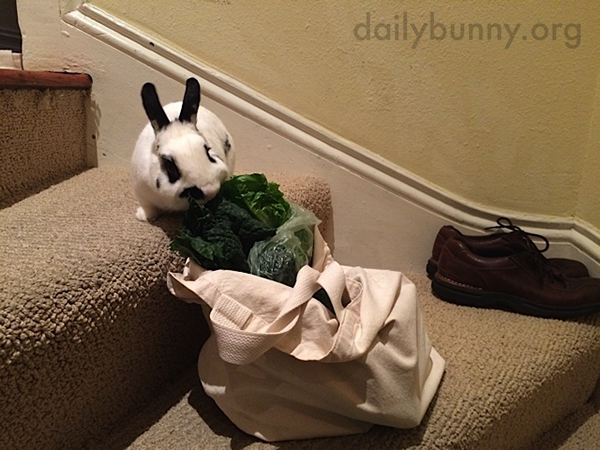 Bunny Finds Human's Grocery Haul Before It Can Be Put Away