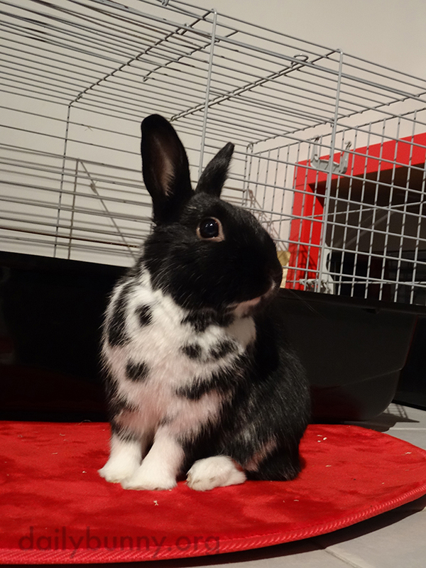 Bunny Holds a Proud Pose