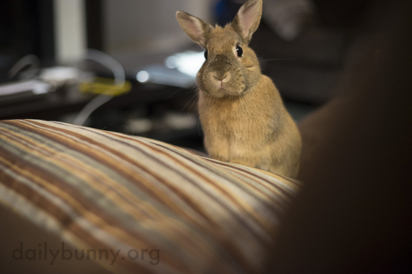 Bunny Keeps an Eye on Human's Comings and Goings 2