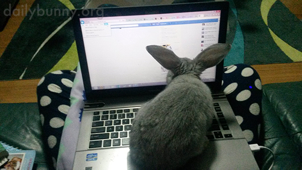 Bunny Puts the Computer on Helicopter Mode