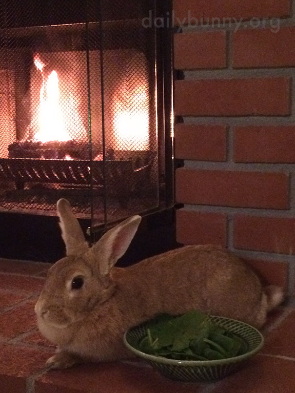 Bunny Relaxes with Some Greens by the Fire 1