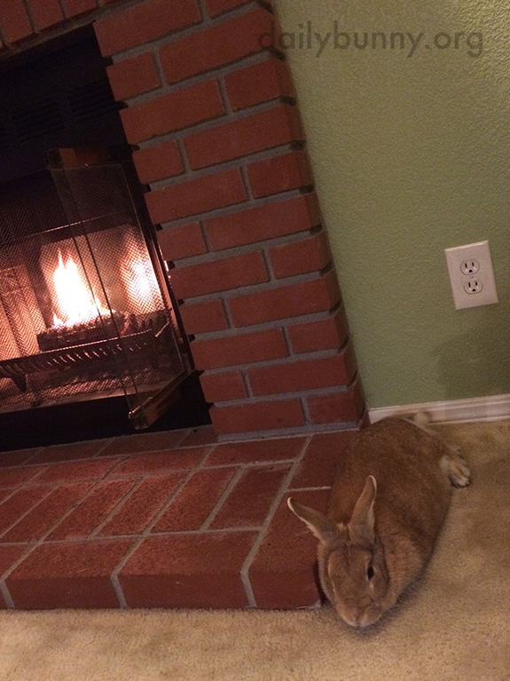 Bunny Relaxes with Some Greens by the Fire 2