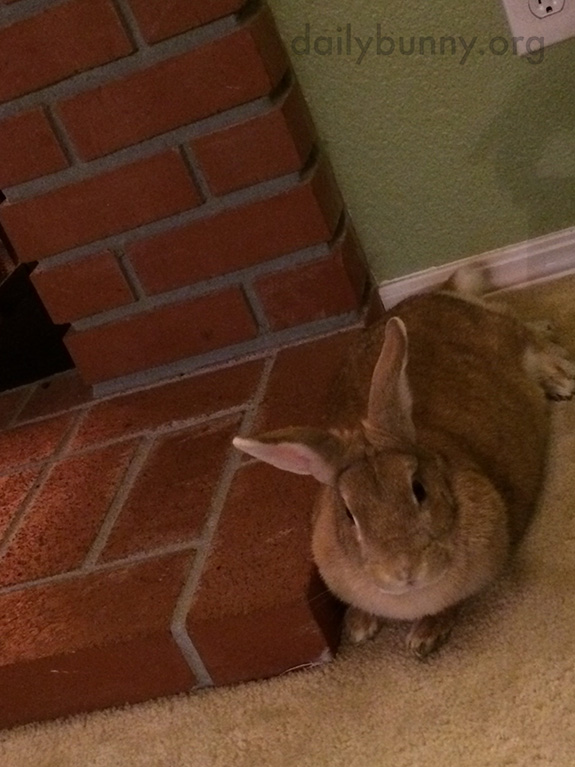 Bunny Relaxes with Some Greens by the Fire 3