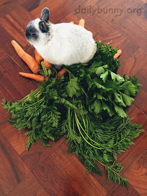 Bunny Sits on His Treasure Hoard of Greens
