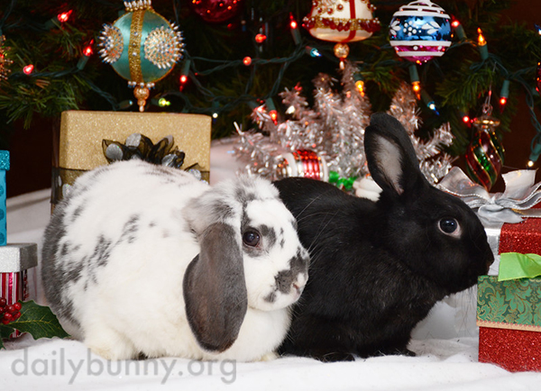It's the Daily Bunny's Christmas 2014 Mega-Post! 10