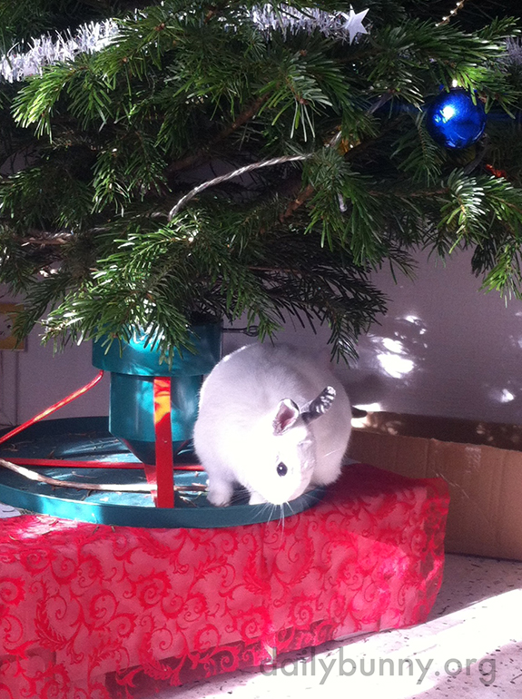 It's the Daily Bunny's Christmas 2014 Mega-Post! 13