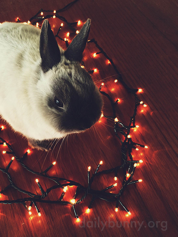 It's the Daily Bunny's Christmas 2014 Mega-Post! 14