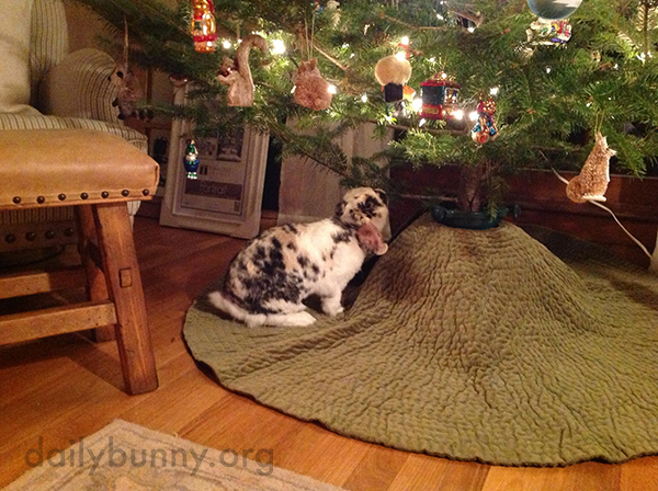 It's the Daily Bunny's Christmas 2014 Mega-Post! 15
