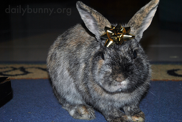 It's the Daily Bunny's Christmas 2014 Mega-Post! 19