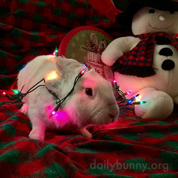 It's the Daily Bunny's Christmas 2014 Mega-Post! 22