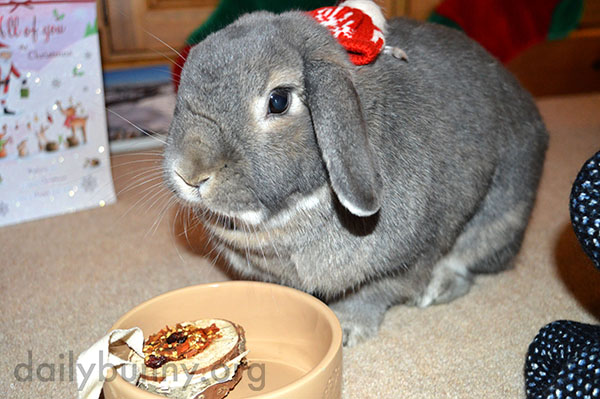 It's the Daily Bunny's Christmas 2014 Mega-Post! 25