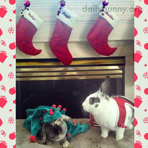 It's the Daily Bunny's Christmas 2014 Mega-Post! 27