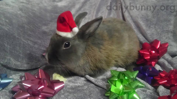 It's the Daily Bunny's Christmas 2014 Mega-Post! 3