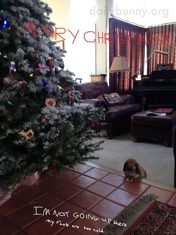 It's the Daily Bunny's Christmas 2014 Mega-Post! 5
