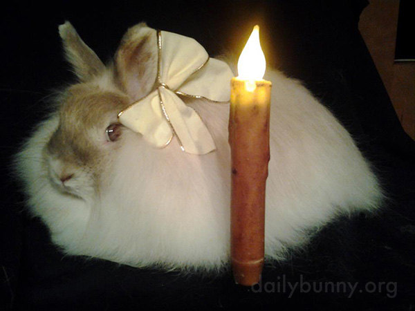 It's the Daily Bunny's Christmas 2014 Mega-Post! 7