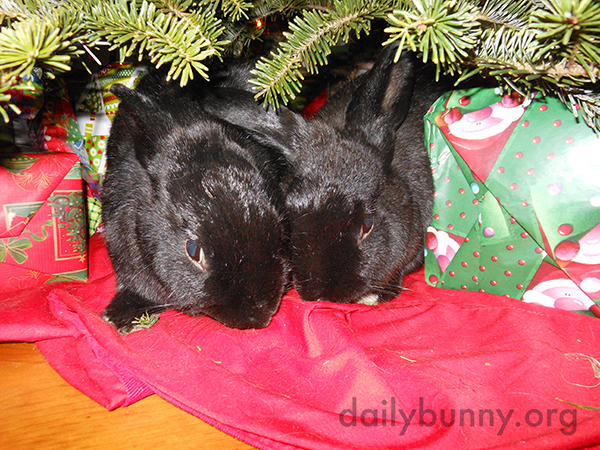 More Holiday Bunnies! 3