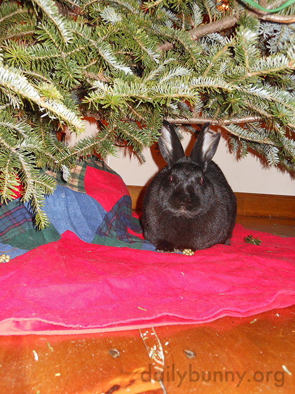 More Holiday Bunnies! 4