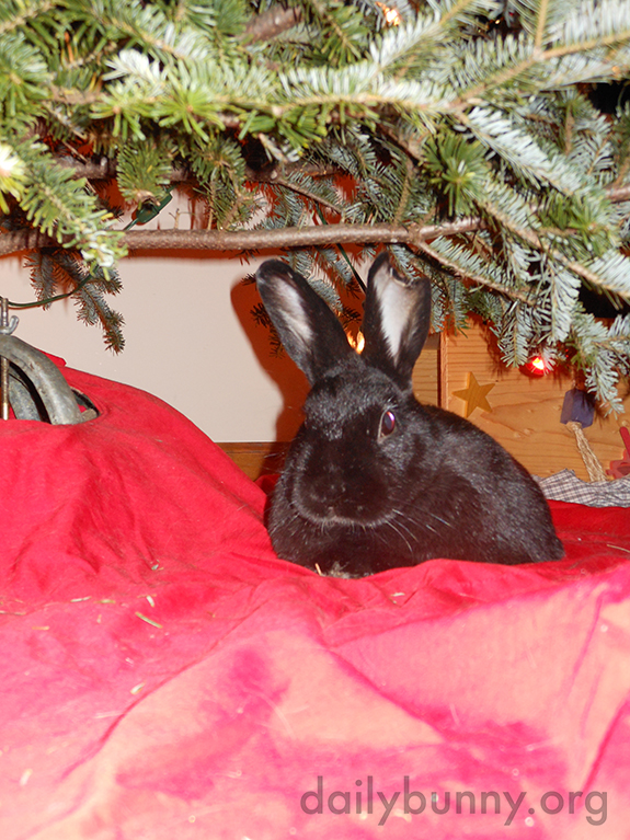 More Holiday Bunnies! 5