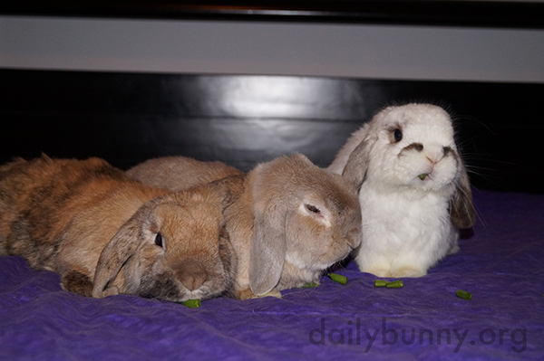 Sometimes It's Hard to Get Bunnies to Sit for Photos 1
