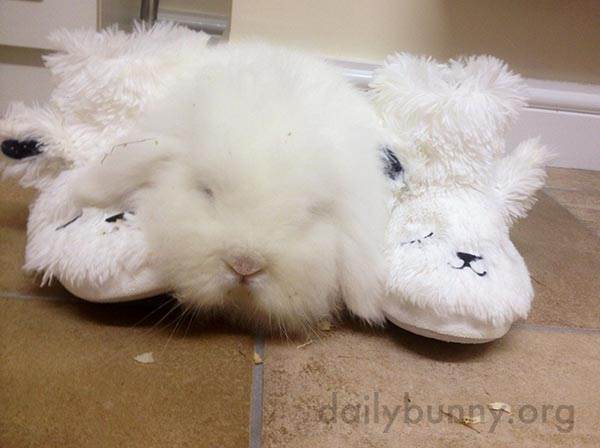 Bunny Cozies Up with His Human's Slippers