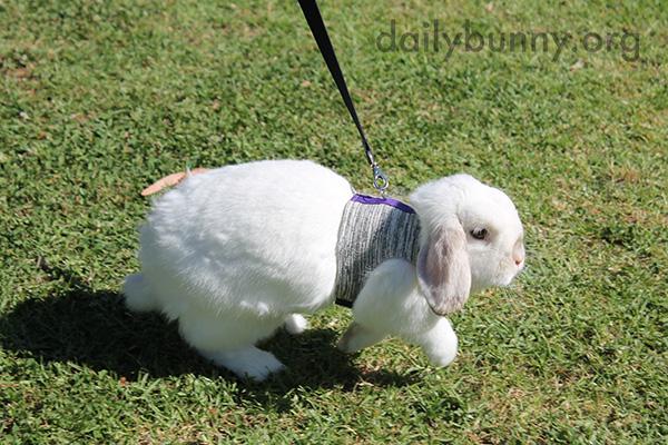 Bunny Explores the Park 1