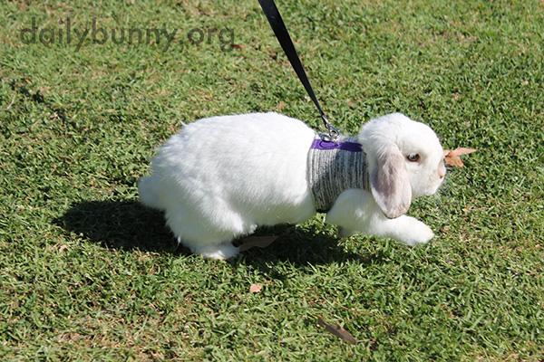 Bunny Explores the Park 2
