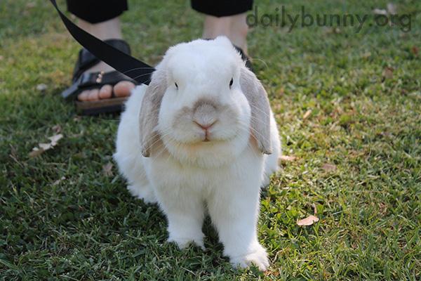 Bunny Explores the Park 4