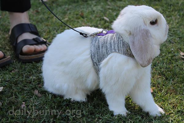 Bunny Explores the Park 5